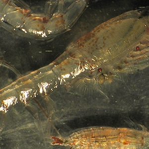 New Bering Sea research reveals how changing ecosystem impacts America's most valuable fisheries